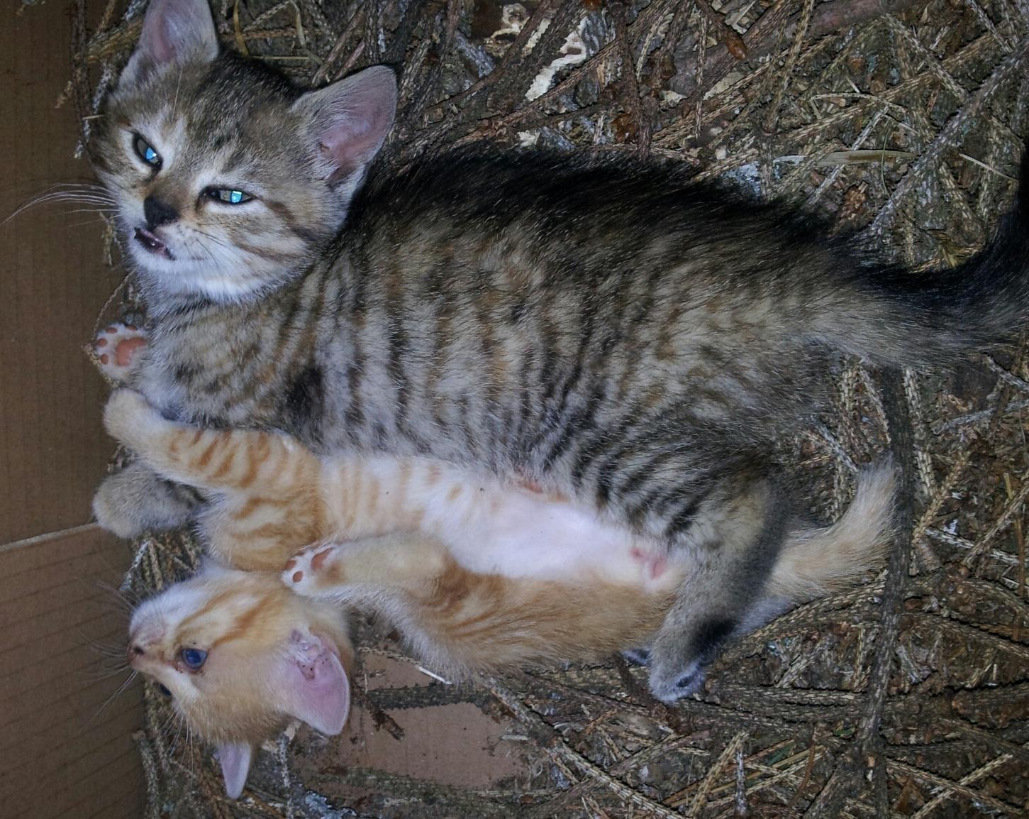 Katzenbabies Suchen Ein Neues Zuhause Aidsberatungsstelle Oberpfalz